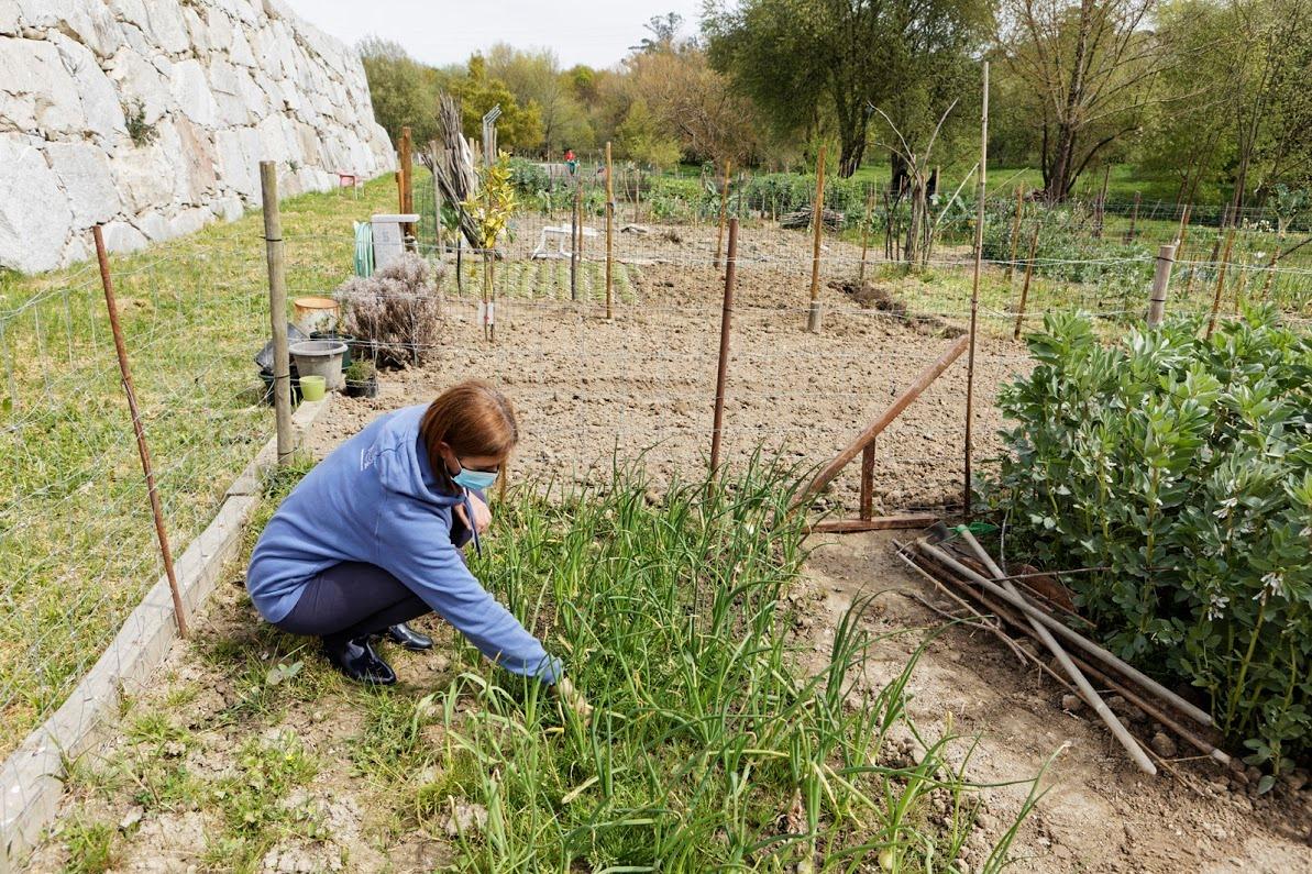 Hortas comunitárias da Quinta da Cruz