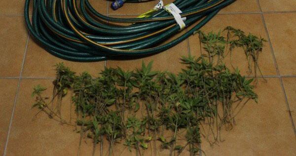 gnr-apreensão-droga-sjpesqueira-04-05-2021