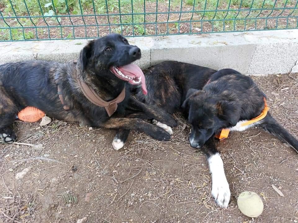 cães abandonados canil de tondela